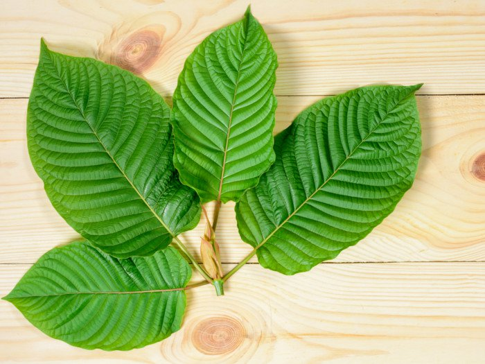 What are Kratom Leaves?