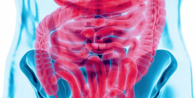 The gut health and balance